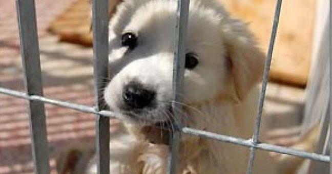 Germania, cani fuori due volte al giorno per legge