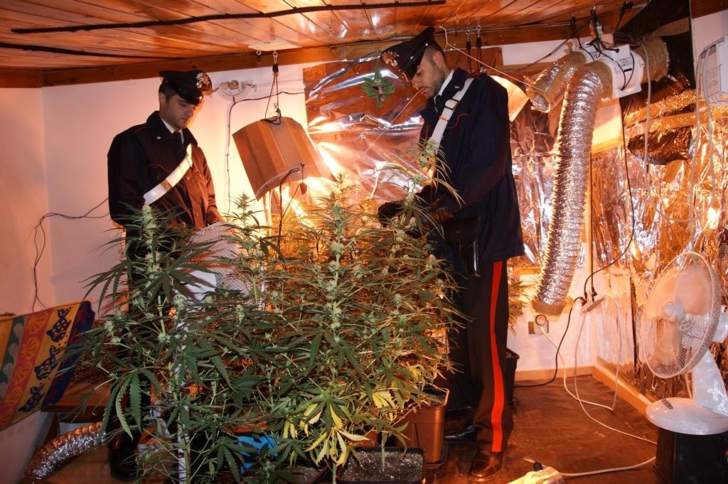 Serra di marijuana in casa e spaccio a ballar due arresti live sicilia - Luce per piante in casa ...