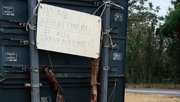 Lupo ucciso e scuoiato appeso a un cartello a Suvereto
