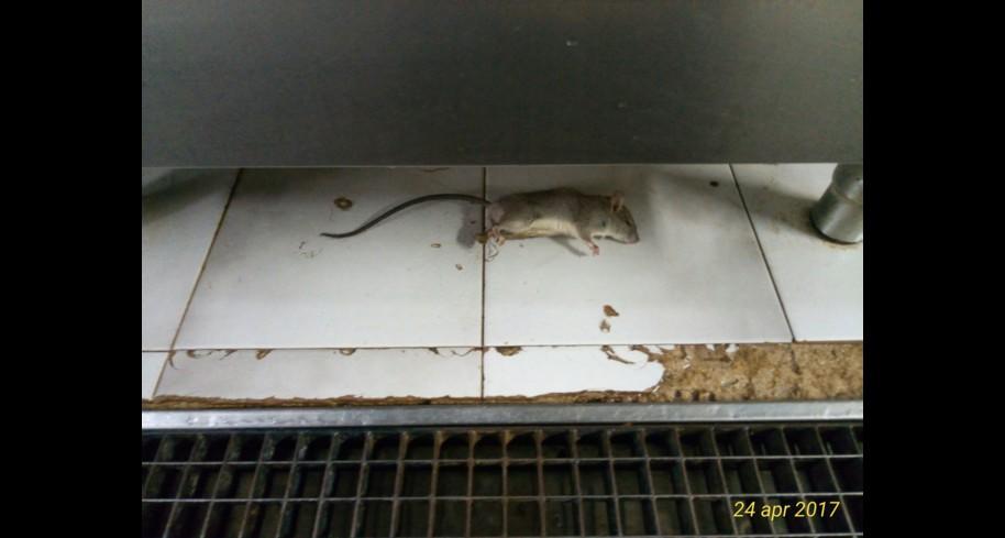 Cucina In Pino Russo : Se in cucina cè un topo foto modica lintervento dellasp live