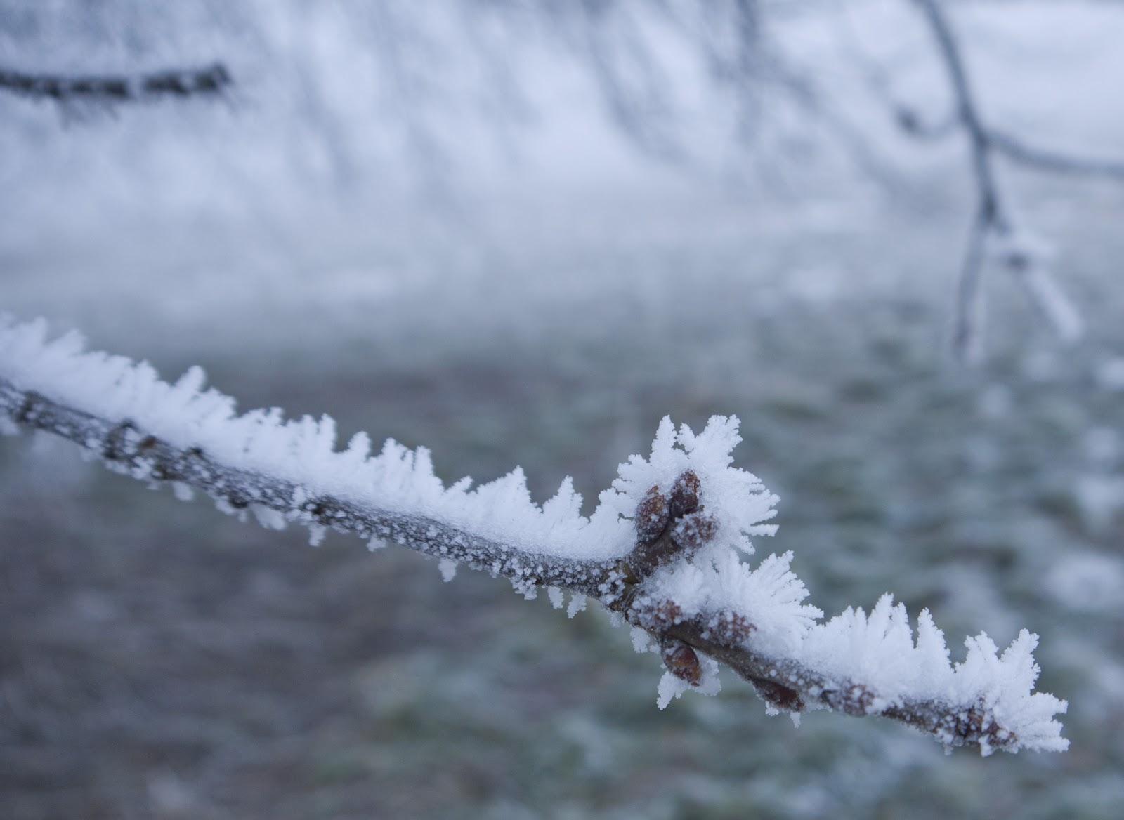 Maltempo, Toscana: codice giallo per neve e vento fino al 25 febbraio