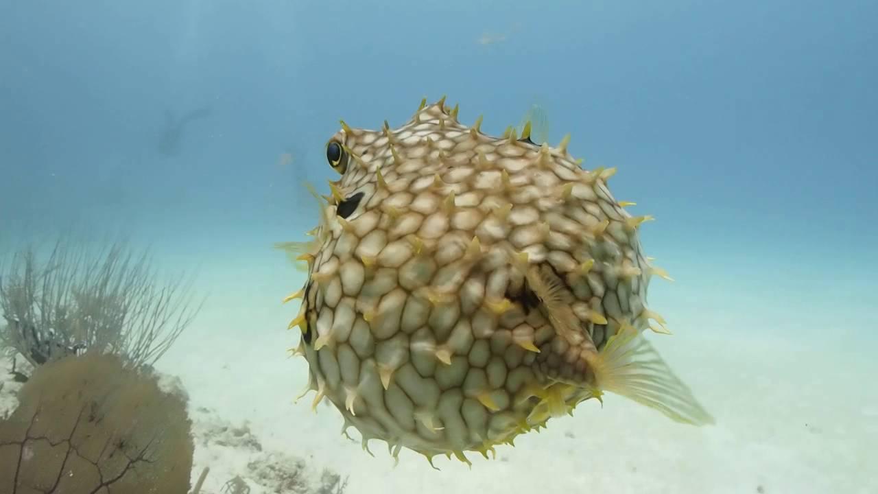 Attenzione, se incontrate questo pesce... - Live Sicilia