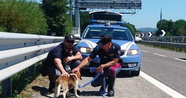 cagnolino in autostrada