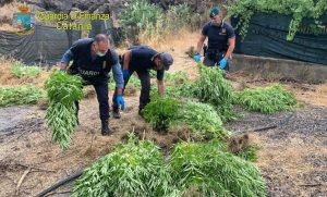 Finanza, maxi sequestro di marijuana:  arrestato cinquantenne